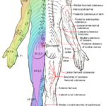 Sciatica Symptoms, Causes and the Best Natural, Non-Invasive Treatment